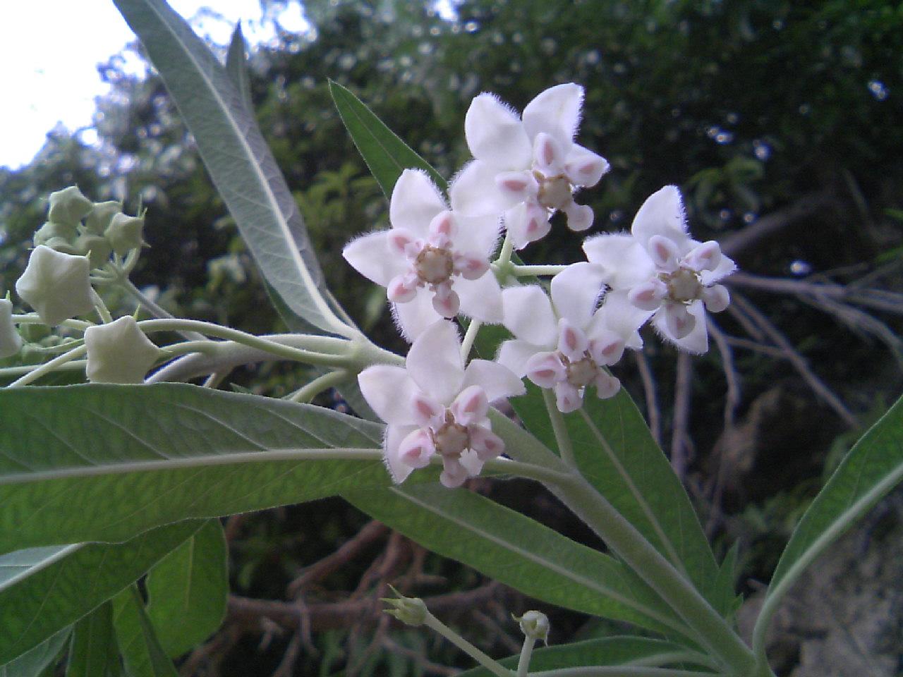 なんという名のお花?
