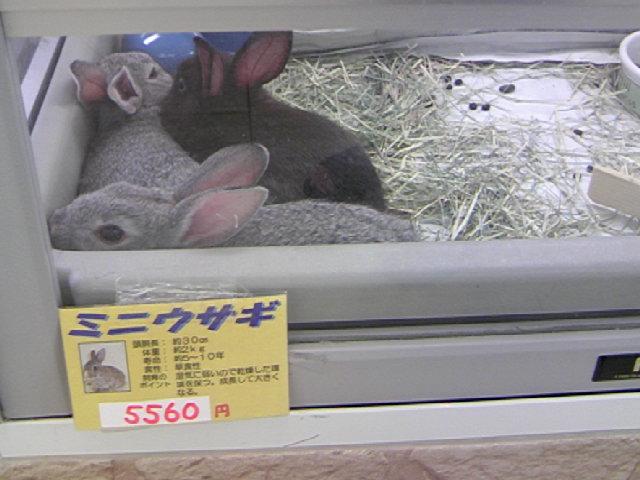 ウサギ無料!