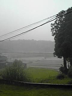 梅雨らしく。