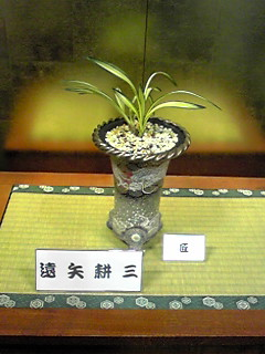 蘭の展示会。