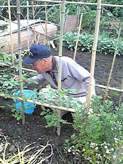 野菜作り。