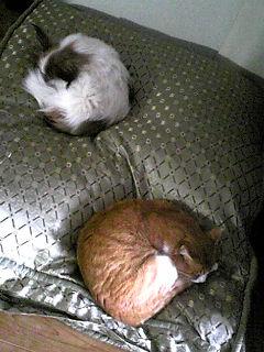 ペット用ベッド。
