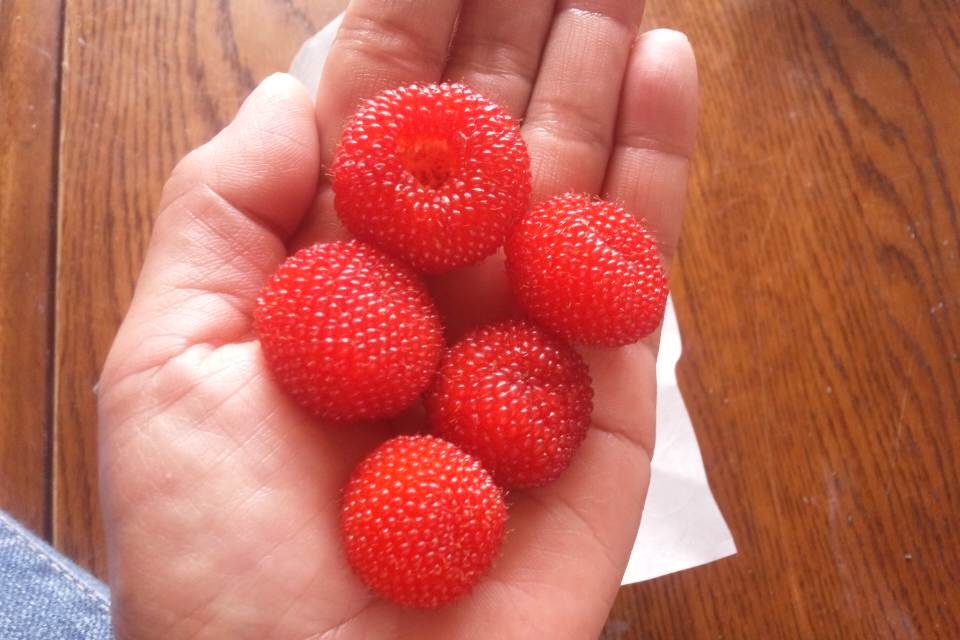 野イチゴ。