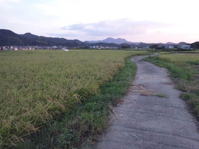 稲刈り3日目。