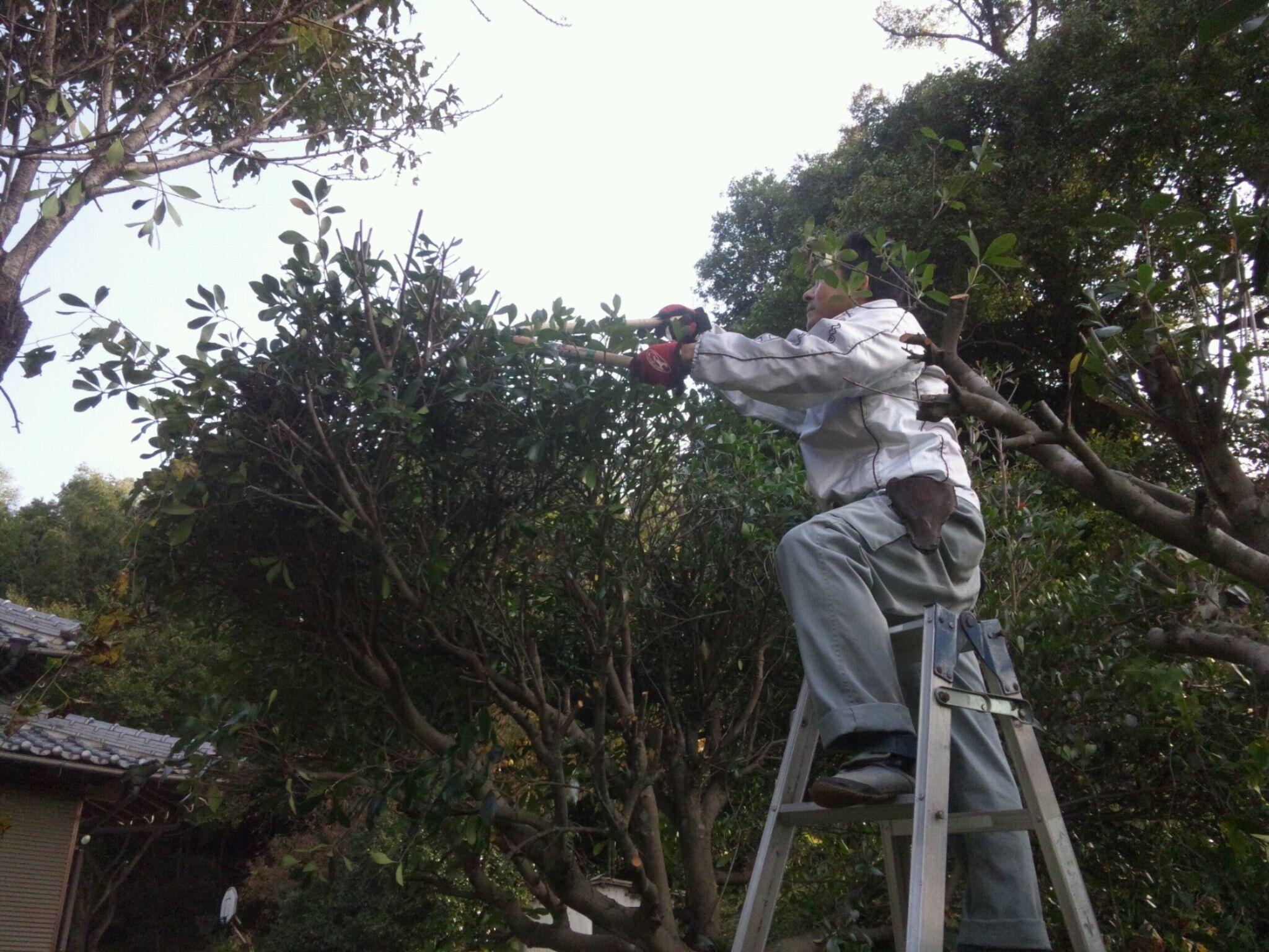 庭木の剪定。