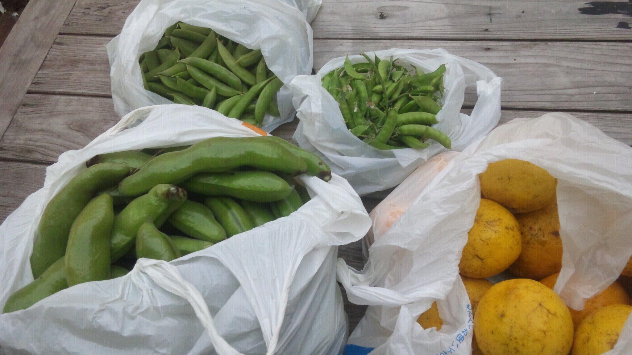 豆の季節。